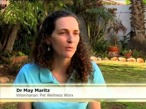 Hill's: Tui Na Canine Massage