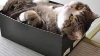 Watching cat videos online boosts viewers' energy and positive emotions according to Science study