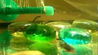 АКВАРИУМНЫЕ РЫБКИ: СОМИК КРАПЧАТЫЙ http://goldfish.moy.su/index/0-7(КУПИТЬ АКВАРИУМНЫХ РЫБОК СОМИК КРАПЧАТЫЙ ВУАЛЕВЫЙ http://goldfish.moy.su/index/0-7 ТЕЛ. 063 139 48 58 ДОСТАВКА ТОЛЬКО ПО ГОРОДУ..., 2012-12-11T05:07:31.000Z)