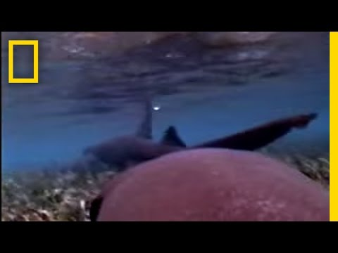 Sharks In Love