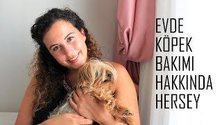 Evde Bir Köpek ile Yaşamak | Köpek Bakımı Hakkında Herşey