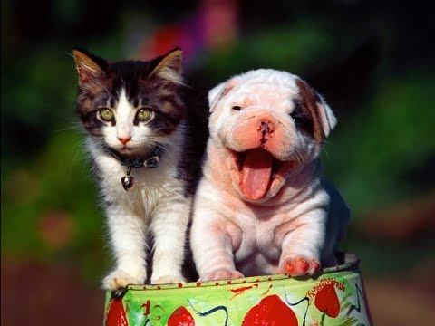 Cute and Funny Pets   Funny Cat and Dog Videos Compilation #7