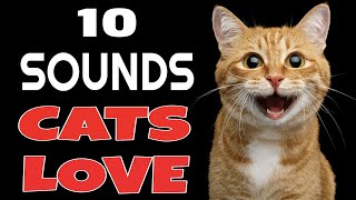 10 Sounds Cats Love To Hear The Most