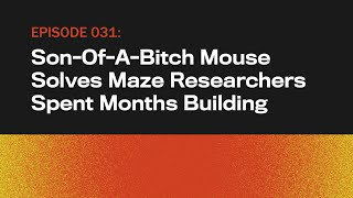 Son-Of-A-Bitch Mouse Solves Maze Researchers Spent Months Building   The Topical   Ep 31