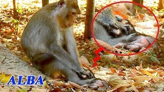 URGENT RESCUE BABY ALBA FROM STUPID MOM ANNA | POOR BABY ALBA WAS TORTURED BY MOM ANNA