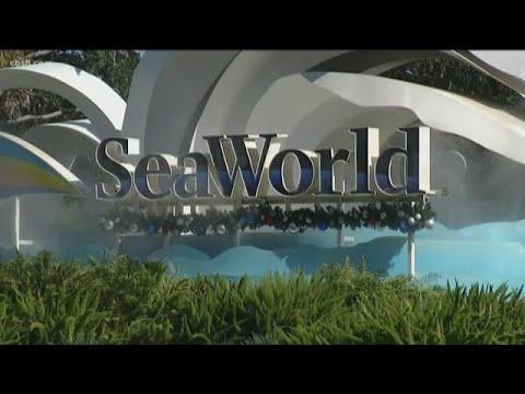 SeaWorld Prepares Defense In Class Action Lawsuit Over 'Blackfish' Impact