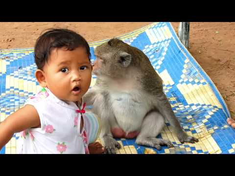 Good relationship betweeen poor monkey Sok and cute baby