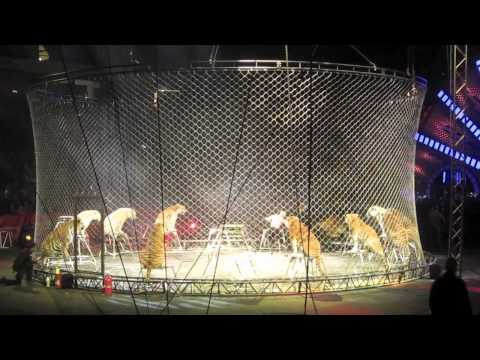 Going To The Circus And Joining In