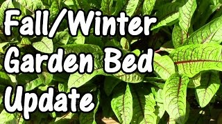 Food Forest Update: The Fall & Winter Garden Bed