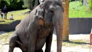 Paradisio Zoo Pairi Daiza ( Nikon d5100 ) 2