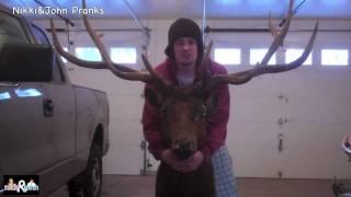 Elk Head Prank