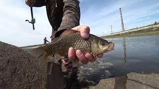 ЛОВЛЯ КАРПА И КАРАСЯ НА ПОПЛАВОК рыбалка летом