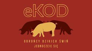 Dziki - unpublished
