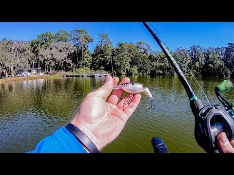 Fishing Crankbaits For Early Fall Bass (Grassy Pond)
