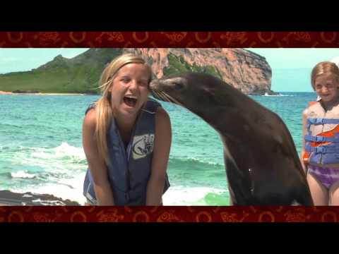 Encounter the World's Most Loved Creatures at Sea Life Park Hawaii
