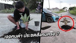 ปลูกต้นไม้กลางถนน - NON1LIFE