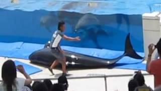 Acidente com baleia piloto em aquário thumbnail