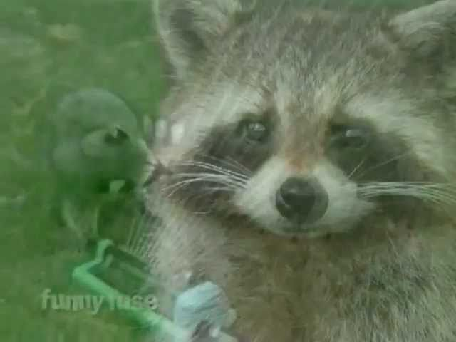 Happy Birthday Funny Raccoon Style Youtube