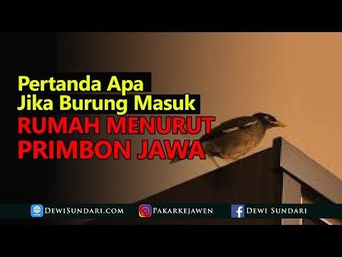 Arti Pertanda Burung Masuk Rumah Menurut Primbon Jawa
