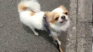 犬の幼稚園 ショーンくんとトレーニング thumbnail