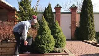 Защита от возвратных морозов солнечного ожога декоративных растений.