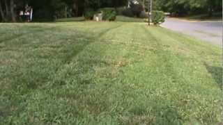 "Cub Cadet 33"" Wide Area Mower in Action."