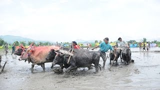 Paddy Planting Festival - Festivals in Nepal