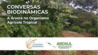A Árvore e o Organismo Agrícola Tropical [CONVERSAS BIODINÂMICAS]