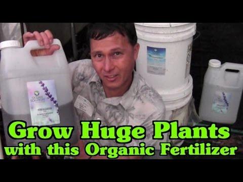 best-liquid-fertilizer-to-grow-huge-plants-in-your-garden