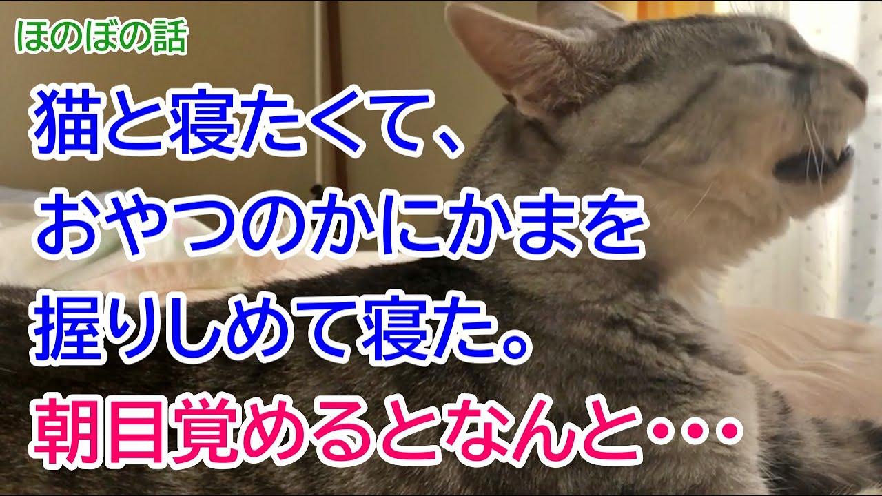 【猫のほのぼの話】猫と寝たくて、おやつのかにかまを握りしめて寝た。朝目覚めるとなんと・・・