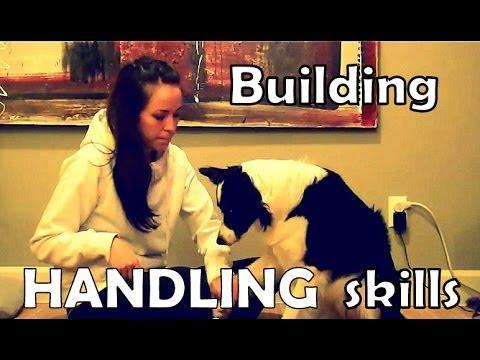 Dog Training - building tolerance to handling