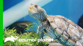 Maggie The Turtle Gets Some De…