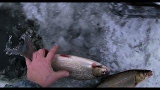 На рыбалку с рыбой - это хорошая примета  Часть 2  05.12.20  Серёга приехал  Весёлая рыбалка