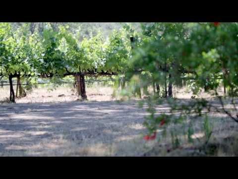 Farming with Biodiversity: Bonterra Organic Vineyards
