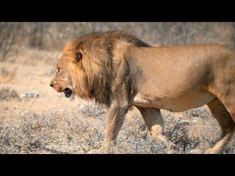 Namibia & Botswana road trip