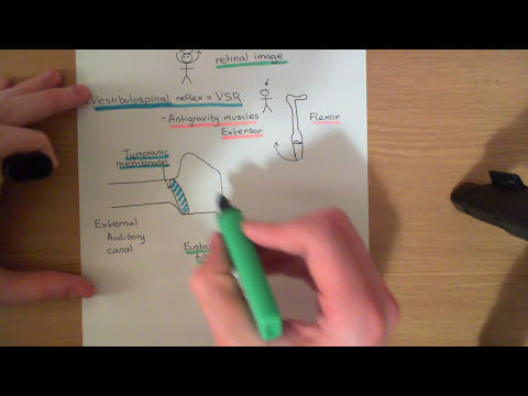 The Vestibular System Part 1