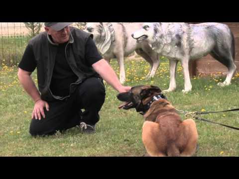 Quand un matre se ddouble pour mieux grer la ractivit de son chien