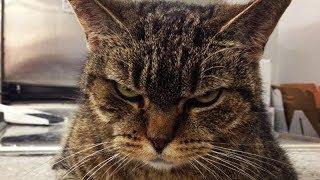 Как кот Васька приучил меня к порядку всего за неделю, а раньше уборкой дома занималась жена
