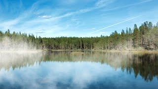 How Tree Planting Can Help Reverse Climate Change
