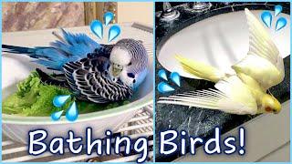 Bath Time For All My Birds!! | How to Bathe Your Bird