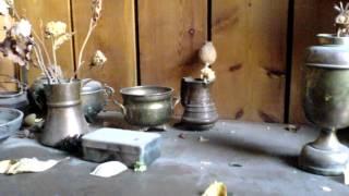 KLIPAS::AlviJago - Pirmosios gėlės