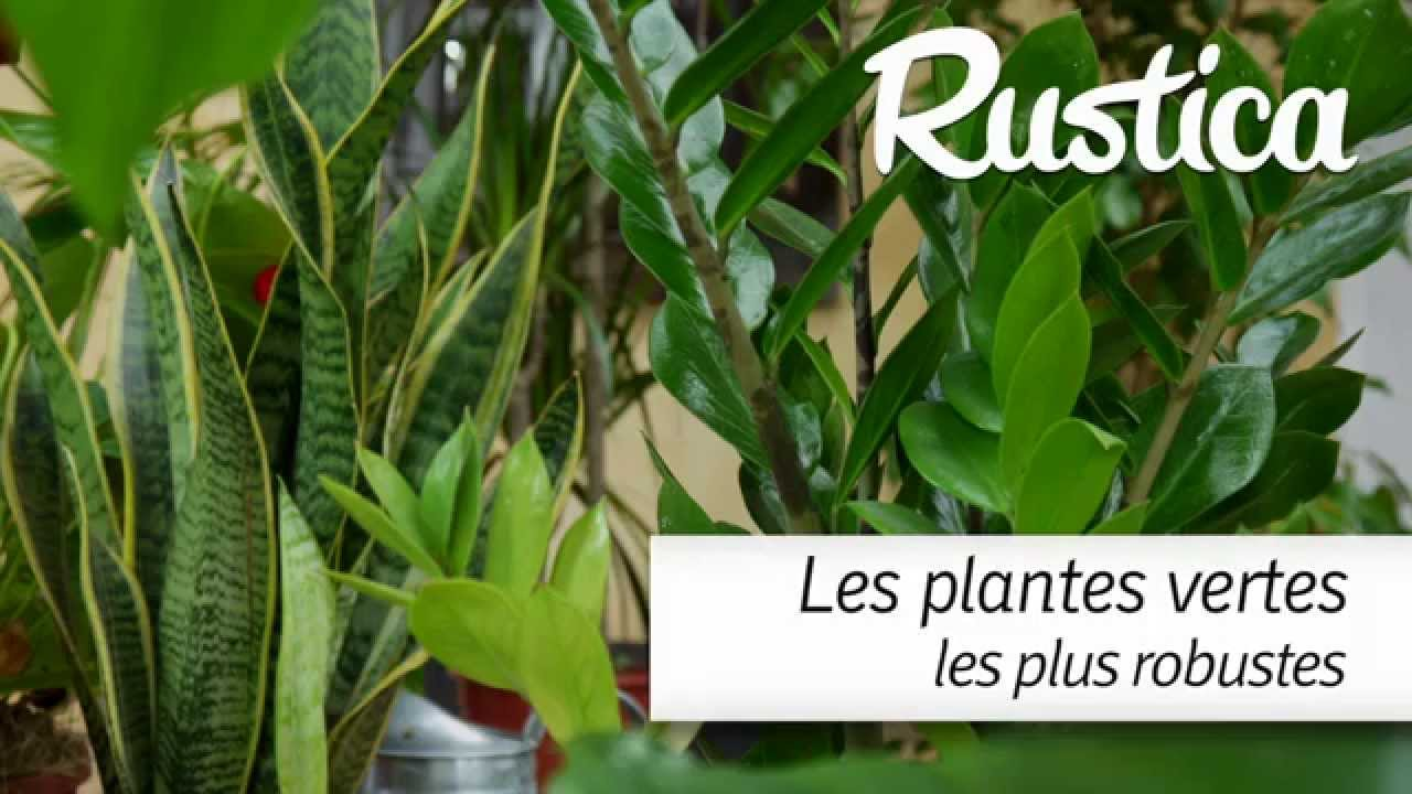 Les plantes vertes les plus faciles youtube for Plante interieur facile entretien