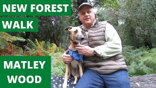NEW FOREST WALK : MATLEY WOOD (NEW FOREST NATIONAL PARK)
