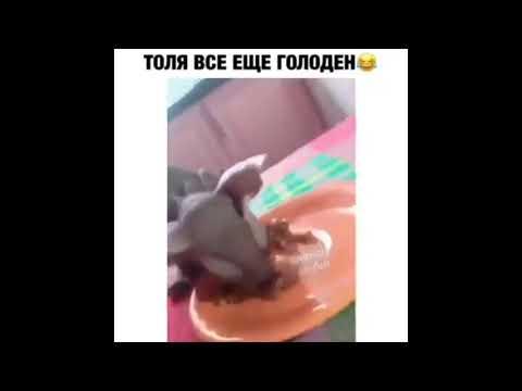 Когда ты Толя и хочешь торт!