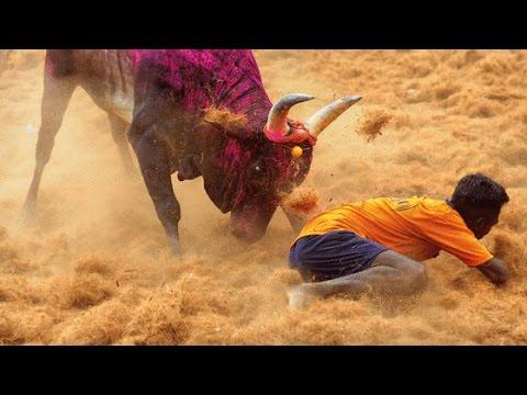 Jallikattu/Manju Virattu (Bull embracing) - Pudukkottai, Tamil Nadu