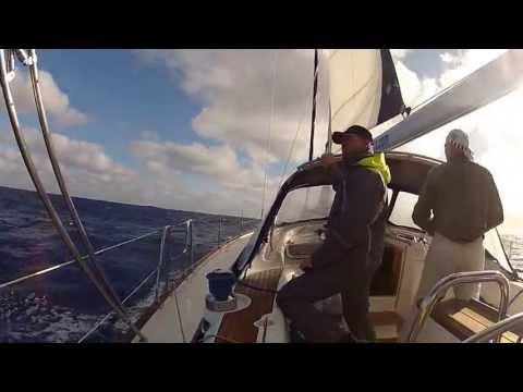 Дельфины до Мадейры 100 nm