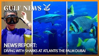 Diving with sharks at Atlantis The Palm Dubai
