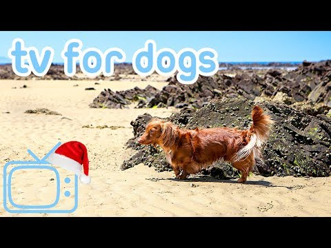 Christmas Eve TV for Dogs! Chill Your Dog at Xmas with TV! NEW!