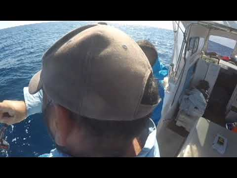 Taking My Dad Fishing With Smithy Fishing Charter In Mooloolaba