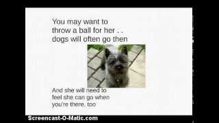 """the Secret To Potty Training A Cairn Terrier!"""